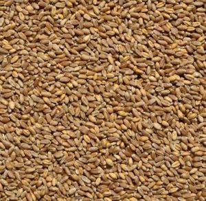 пшеница обрез